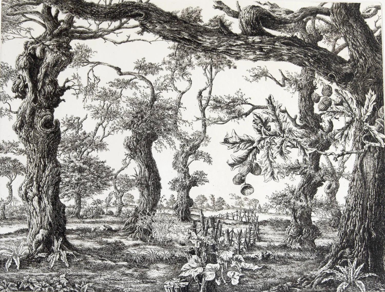 François Houtin Danse avec les chênes