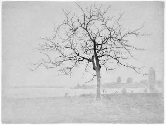 Gunnar Norrman | Äppelträd