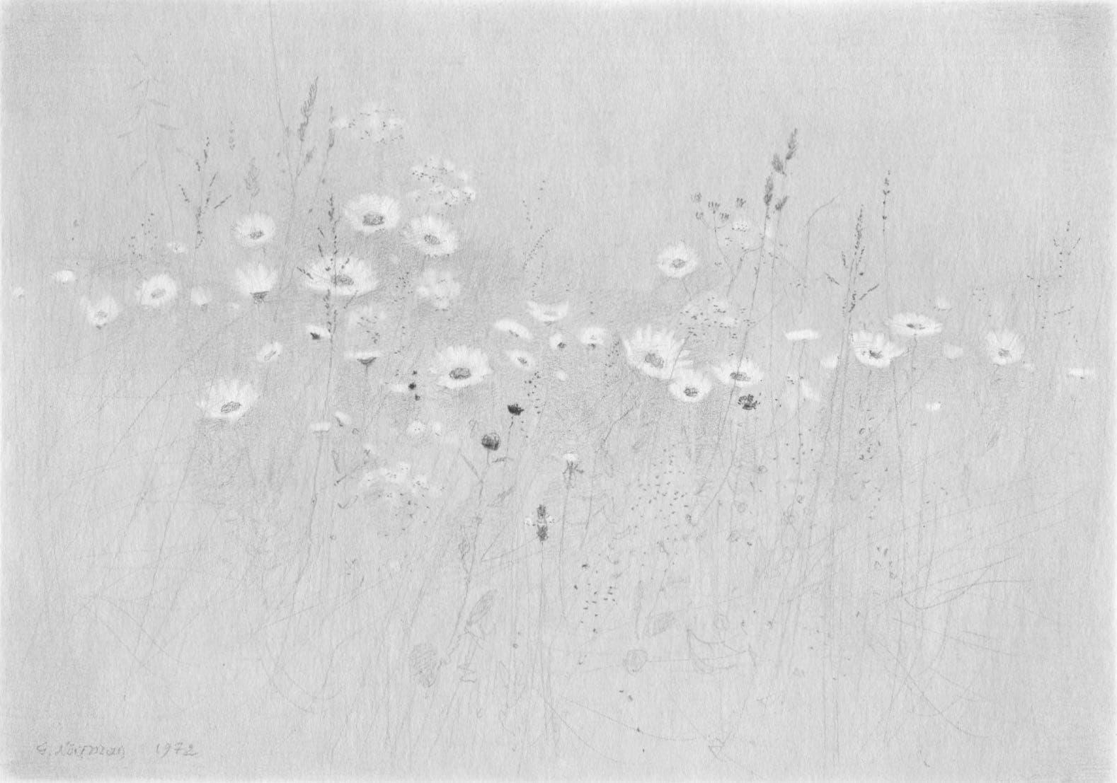 Gunnar Norrman - Blomsteräng