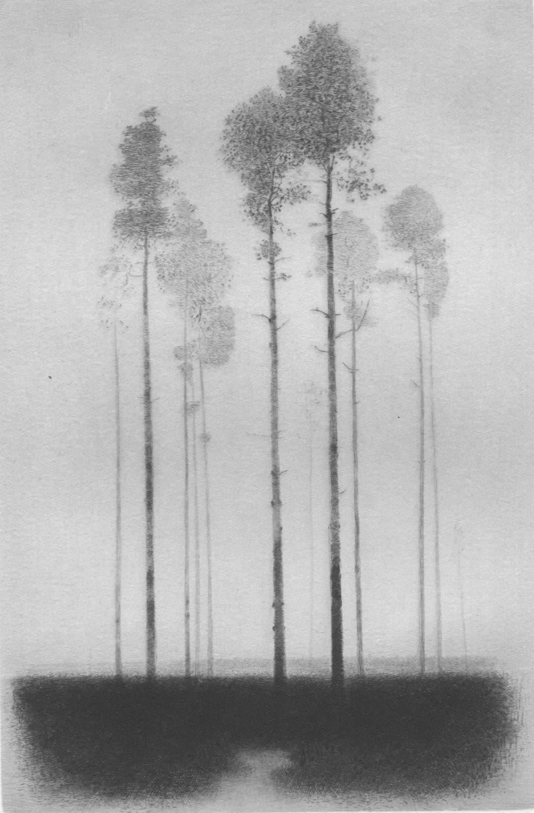 Gunnar Norrman - Tallhed